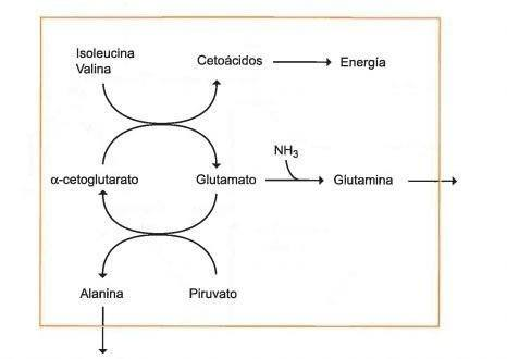 Tres tácticas simples para Tipos de metabolismo descubiertas