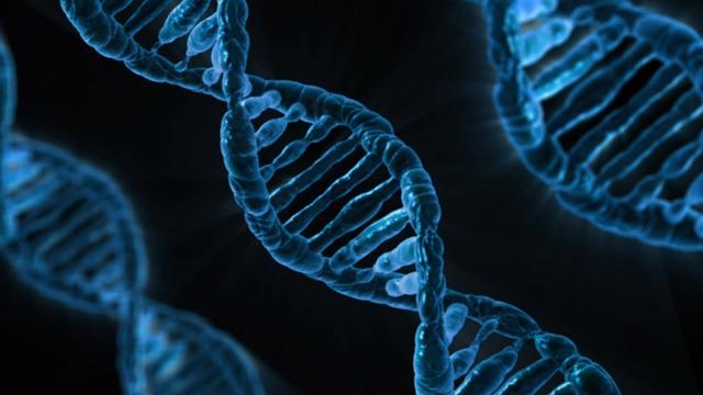¿Qué es la telomerasa?