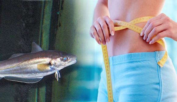 El hidrolizado de pescado que ayuda a la composición corporal