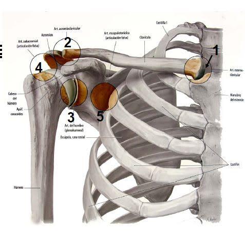 Proteger nuestros hombros: evitar lesiones y mejorar rendimiento ...