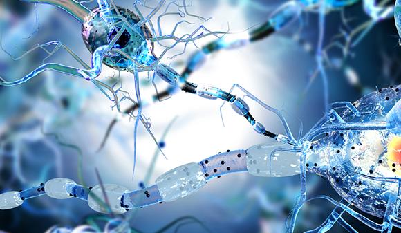 Descubren la fuente de nuevas neuronas en el hipocampo del cerebro