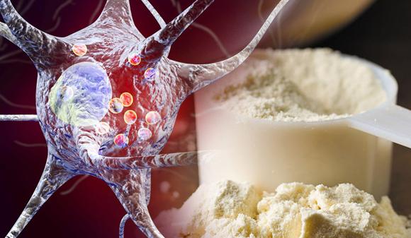 Glutamina y Sistema Inmunológico