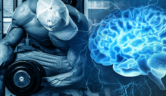 El ejercicio crea nuevas neuronas