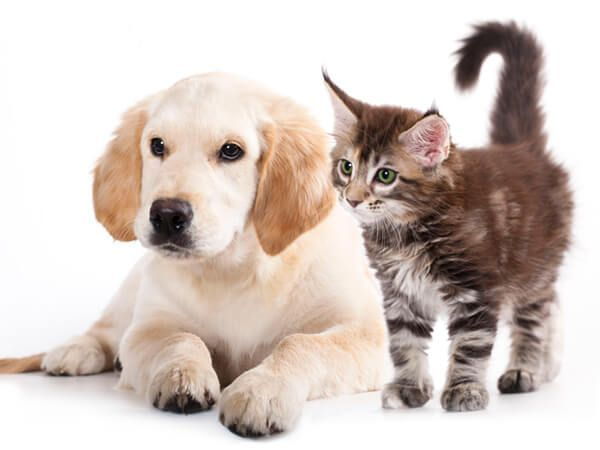 Suplementos para Mascotas